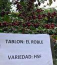 El Salvador El Roble location